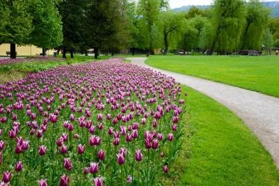 Salzburg tulips with Scenic River Cruises