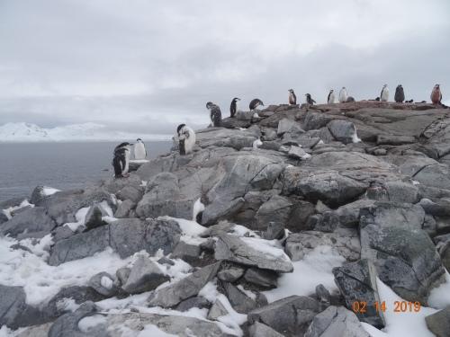 CE Share David F Antarctica 3