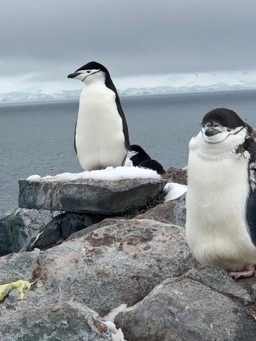 CE Share David F Antarctica 7