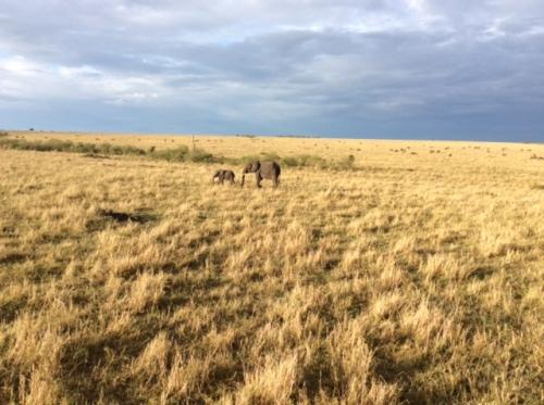 CE Share Mary J Masai Mara