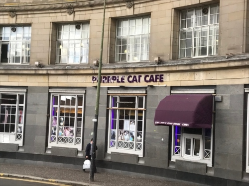CE Share Anna W. Purple Cat Cafe, Glasgow, Scotland