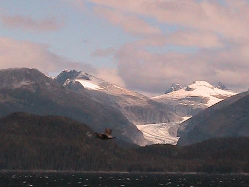 CE Share Pridemore 07 glacier & bird