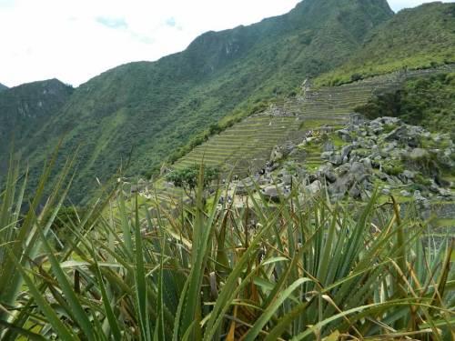 CE Share Don M Machu Picchu 16