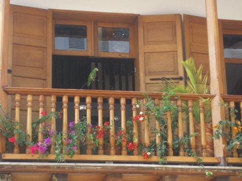 Parrot enjoying the fresh air